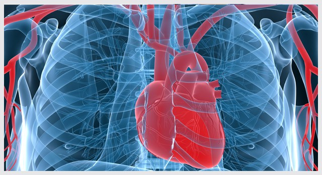 The image presents the Vascular Awareness theme for this month